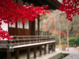 обои Дом,   багряная листва фото