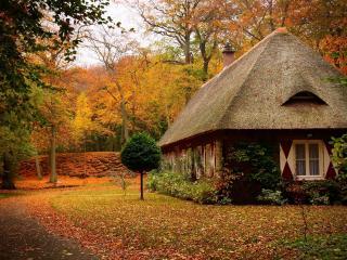 обои Одинокий дом в осеннем лесу фото