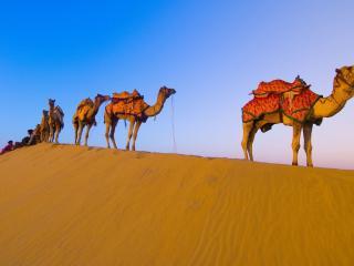 обои Караван верблюдов в пустыне фото