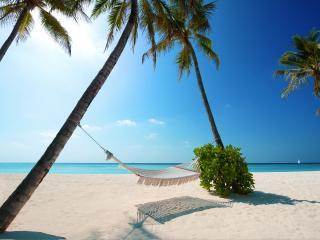 обои Гамак среди пальм на морском берегу фото