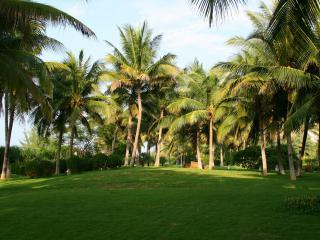 обои Пальмы и трава утром фото