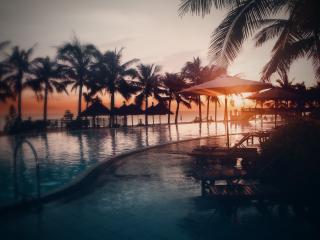обои Пальмы у бассейна фото