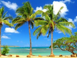 обои Пальмы у океана фото