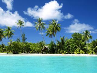обои Тропический пальмовый берег фото