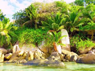 обои Экзотическая природа тропиков фото