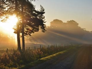 обои Дорога в утренних лучах фото