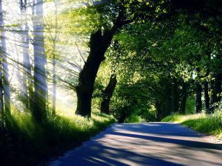 обои Дорога и лучи солца между деревьями фото