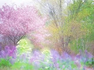 обои Весенняя палитра, яркие цветущие деревья фото