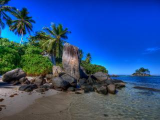 обои Пальмы и камни возле глади морской фото