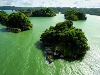 обои Зеленые островки в зеленой воде фото