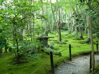 обои Японская природа фото