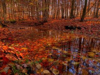 обои Ручей лесной усыпанный листвой фото