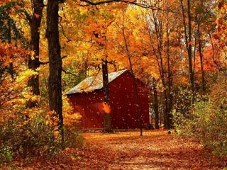 обои Домик в осенним лесу фото