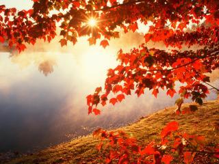 обои Кленовые осенние листья на солнце фото