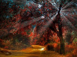обои Красная осень в лучах солнца фото