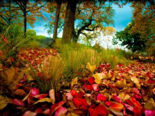 обои Красно-желтая опавшая листва фото