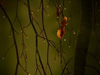 обои Осенний дождь на ветках и листве фото