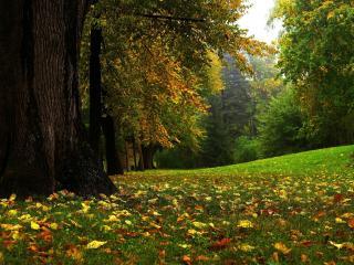 обои Первые опавшие листья в парке фото