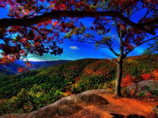 обои Ранняя осень в горах фото