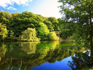 обои Деревья у летнего пруда фото