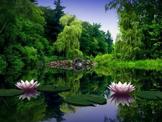 обои Летний пруд с розовыми кувшинками фото