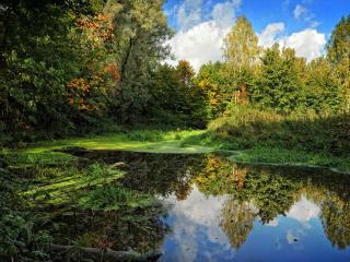 обои Старый лесной пруд осенью фото