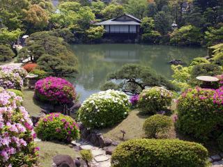 обои Цветущие кустарники у пруда фото