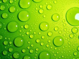 обои Капли на зеленом фоне фото