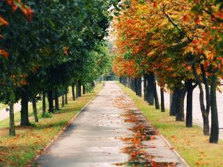обои Аллея в осенних листьях фото