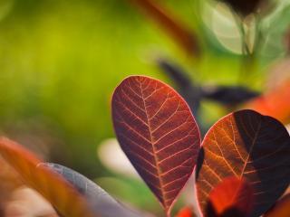 обои Цветные листья декоративного растения фото