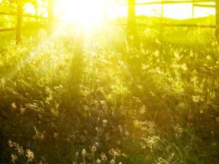 обои Утреннее солнышко на природе фото