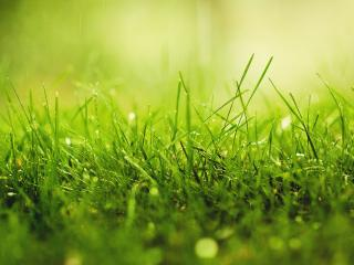 обои для рабочего стола: Умытая дождем трава