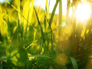 обои для рабочего стола: Трава в бликах солнца