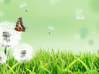 обои Трава с одуванчиками и бабочка фото
