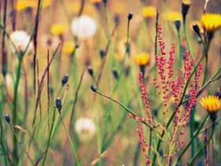 обои Дикое растение трав фото