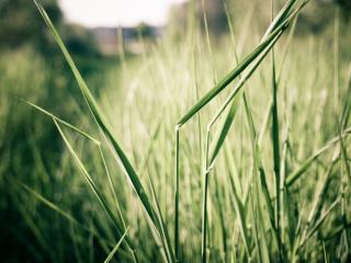 обои Густая трава пырея фото