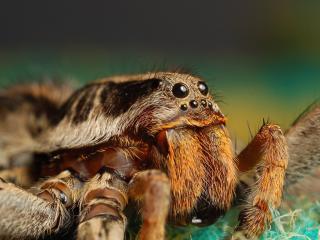 обои Жалы и глаза паука фото