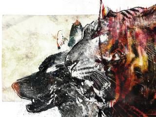 обои Голова волка и тигра фото