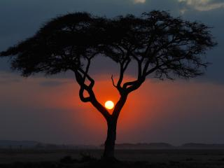 обои Африка, пейзаж с деревом на закате фото