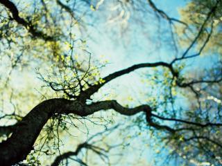 обои Ветки весенних деревьев, возвышающиеся к небу фото