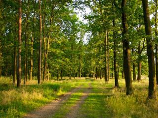 обои Дорога по краю леса фото