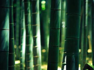 обои Плотные бамбуковые стебли фото