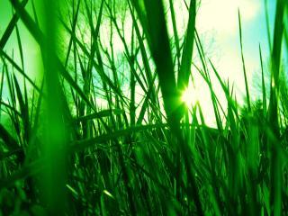 обои Блеск утреннего солнца сквозь травы фото