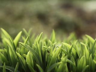обои Весенняя зелень растений фото