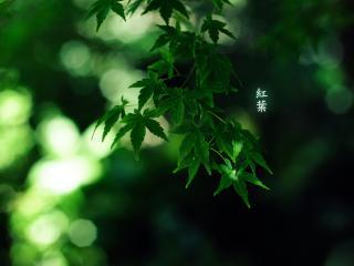обои Зеленая ветка в тенистом лесу фото