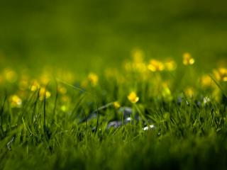 обои Лужайка с первыми цветами и травой фото