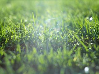 обои Молодая трава в лучах солнца фото