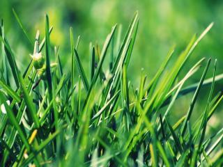 обои Молодые листики травы фото
