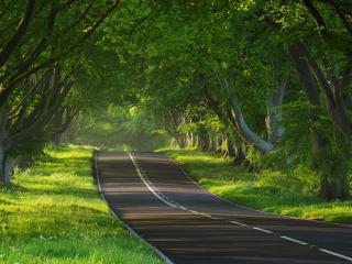 обои Зеленый пейзаж у дороги фото