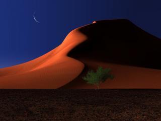 обои Песочные дюны и дерево лунной ночью фото